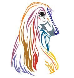 Colorful decorative portrait of dog afghan hound vector