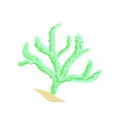 Green finger leather coral aquarium invertebrate vector