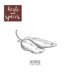 pepper sketch hand drawing pepper vector image