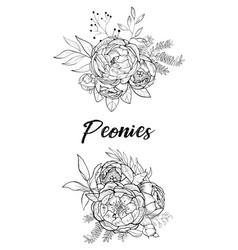 set of bouquets peonies vector image