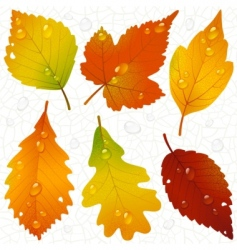autumn leaves and seaml vector image vector image
