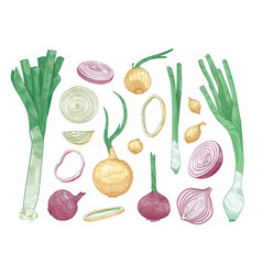 Bundle of different whole and cut onions isolated vector