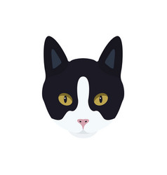 portrait of a black and white cat vector image