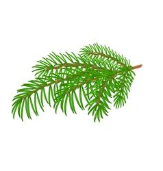 Spruce Christmas tree symbol celebration vector