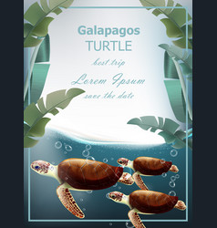 Galapagos turtles summer sea card with vector