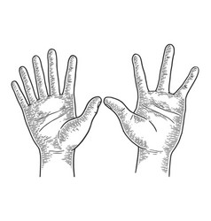 Hands with six and four fingers sketch engraving vector