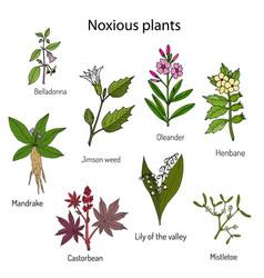 Poisonous plants collection vector