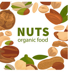 nuts organic raw food poster for nut farm vector image vector image