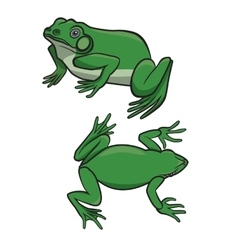Two green frogs vector