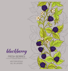 Blackberry background vector