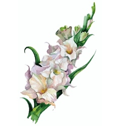 Gladiolus flowers painted vector