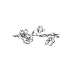 flower branch monochrome floral design element vector image