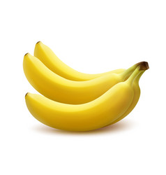 Ripe banana bunch vector