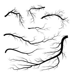 set of dry twigs on white background trees vector image