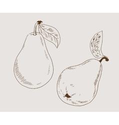 Pears 2 sketch vector