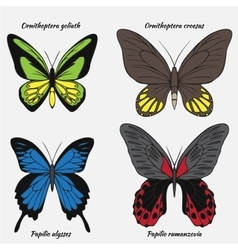 Big realistic collection of colorful butterflies vector