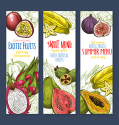 exotic fruit sweet tropical food sketch banner set vector image