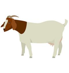 farming set female boer goats vector image