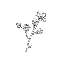 flower branch monochrome sketch floral design vector image