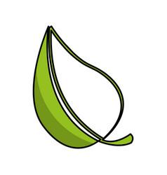 leaf plant ecology symbol vector image