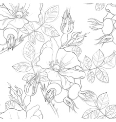 Seamless pattern of wild roses vector