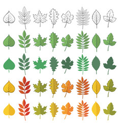 set woody leaves vector image