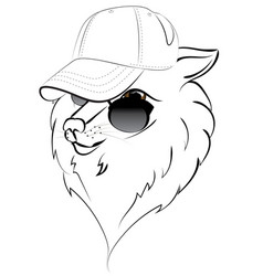 wolf in baseball cap vector image