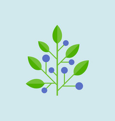 blueberry or berries tree vector image