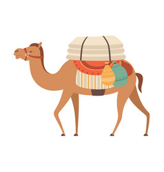 Camel with bridle and saddle desert animal vector