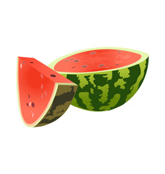 half and slice watermelon vector image