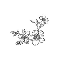 hand drawn flower branch monochrome floral design vector image