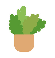 potted plants gardening decoration interior vector image