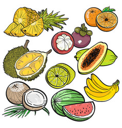 set of color doodle of tropical fruit vector image