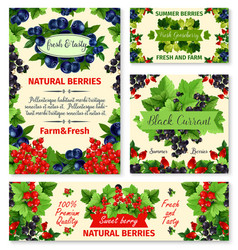Berry summer fruit banner and poster template set vector