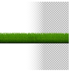 Green grass border isolated vector
