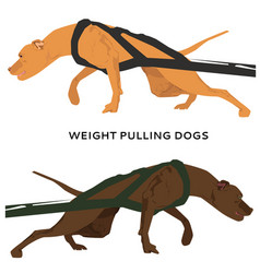 Harnessed dogs pulling hard vector