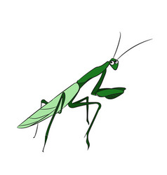 Mantis color vector