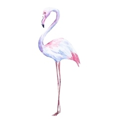 Nice watercolor flamingo vector image