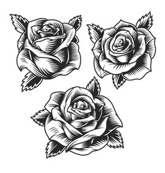 Vintage beautiful rose flowers set vector