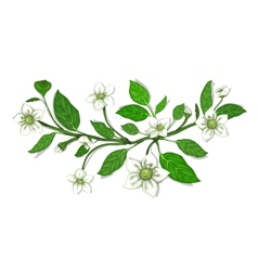 White Flowers on Twig Composition vector