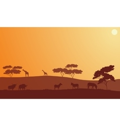 Silhouette of bison zebra and giraffe vector image