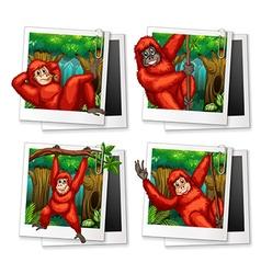 Urangutan in the forest vector image vector image