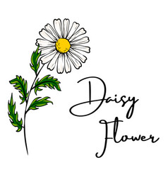 daisy flower drawing vector image