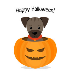 Happy halloween of puppy vector