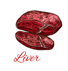 meat liver fresh offals sketch for food design vector image