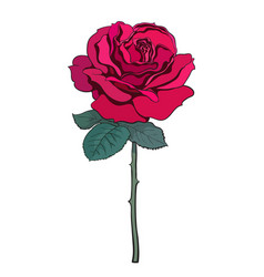 red rose flower with leaves and stem hand drawn vector image