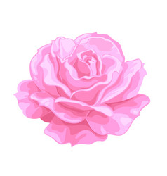 Pink rose open bud realistic hand drawn vector