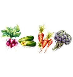 radish cucumber carrots and artichoke vegetables vector image