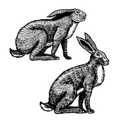 wild hares rabbits are sitting forest bunny or vector image