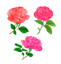 three flower pink rose twig with leaves vector image vector image